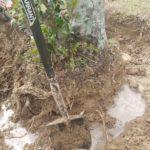 best farm shovel